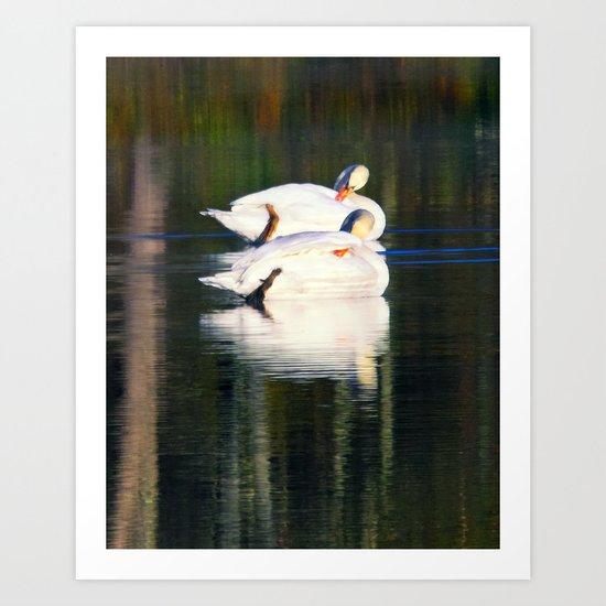 A swans gliding on a lake  Art Print