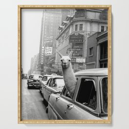 Llama Riding in Taxi, Black and White Vintage Print Serving Tray