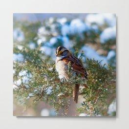 Sunlight Sparrow Metal Print