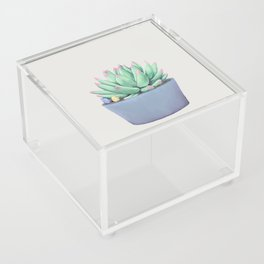 Small Potted Succulent with Crystals Acrylic Box