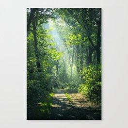 Woodland Glory Canvas Print