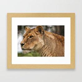 Josie the Lioness Framed Art Print