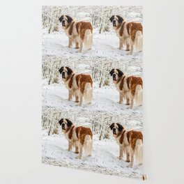 St Bernard dog in the snow Wallpaper