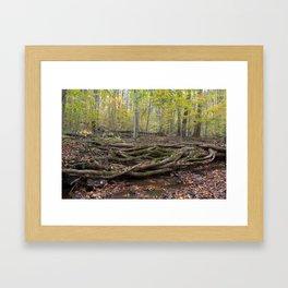 Interwoven roots Framed Art Print
