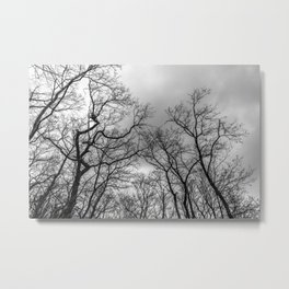 Black and white naked trees silhouette Metal Print