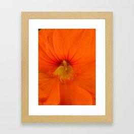 Deep Orange Flower Framed Art Print