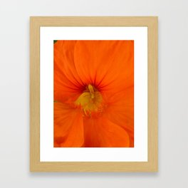 Deep Orange Flower Framed Art Print