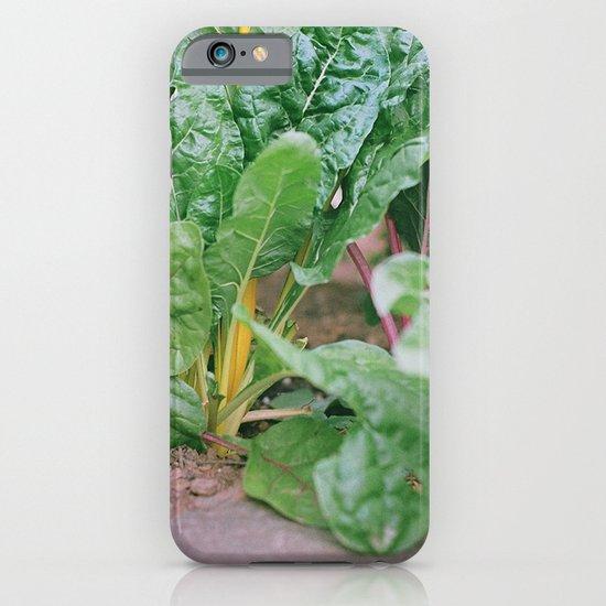 Rainbow Chard iPhone & iPod Case
