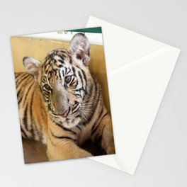 Tiger, Small Indo-China  Stationery Cards