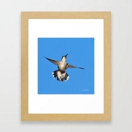 Flying Hummingbird Framed Art Print