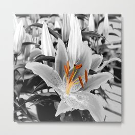 Selective Coloring Daylilly Metal Print