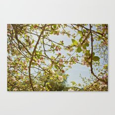 Little pink flowers on a tree Canvas Print