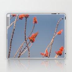 Ocotillo in Bloom Laptop & iPad Skin