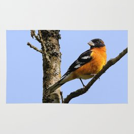 Profile of a Male Black-Headed Grosbeak Rug