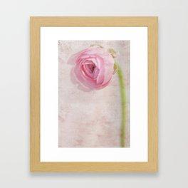 Ranunculus Framed Art Print