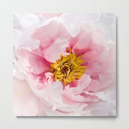Pink Peony | Flower Photography |  Pink Floral | Botanical | Flowers | Nature Metal Print