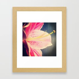 Stargazer Lily - iPhoneography Framed Art Print