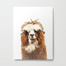 Alpaca Portrait Metal Print