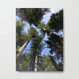 Glimpse Through the Trees Metal Print