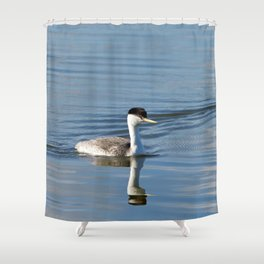 Western Grebe on calm water Shower Curtain