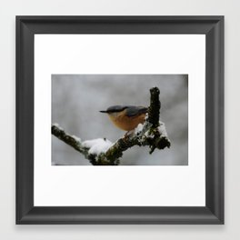 Nuthatch in the winter Framed Art Print
