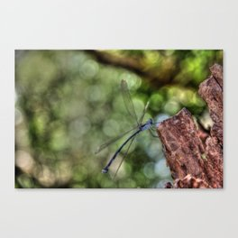 Dragonfly, Port Douglas Canvas Print