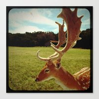 antlers Canvas Prints featuring Antlers by Anna Dykema Photography