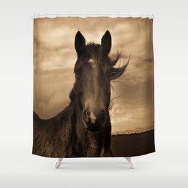 English horse in sepia tones Shower Curtain