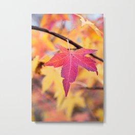 Autumn Still Metal Print