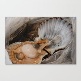 Raw scallop in the shell, opened Canvas Print