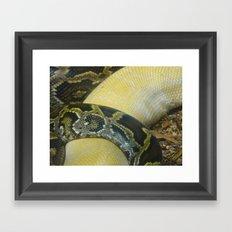 Boas Crossing Framed Art Print