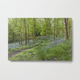 Along the Winding Path Metal Print