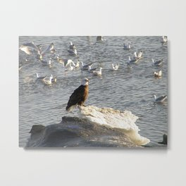 Eagle on Ice Metal Print