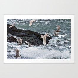 Gulls shop for Dinner Art Print