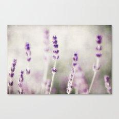lavender lavender Canvas Print