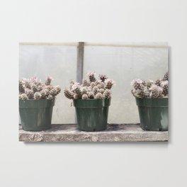 Three Little Cacti Metal Print