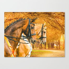 Beautiful horses, autumn park with yellow leaves as a background. Canvas Print