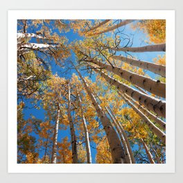 Aspen Trees Against The Sky In Crested Butte, Colorado for #Society6 Art Print