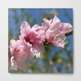 Peach Tree Blossom Against Blue Sky Metal Print
