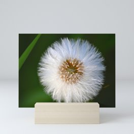 Softness Dandelion Mini Art Print