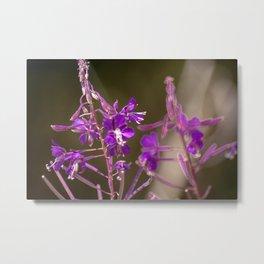 Concept flora : Lythracaee Metal Print