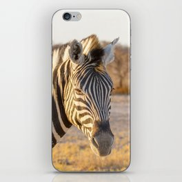 Lone Zebra - Head only, portrait iPhone Skin