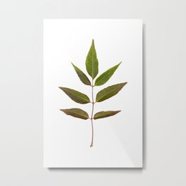 Leaf Botanical Print Metal Print