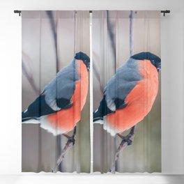 Bullfinch Blackout Curtain