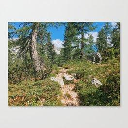 Path through the mountain forest Canvas Print
