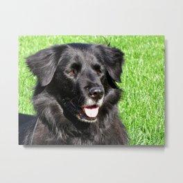 Sweet dog  Metal Print