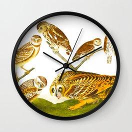 Burrowing Owl Illustration Wall Clock
