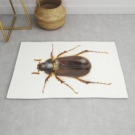 "cockchafer or june beetle ""Amphimallon solstitialis"" species Rug"