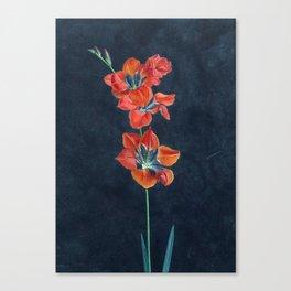 Gash Gold Vermilion Canvas Print