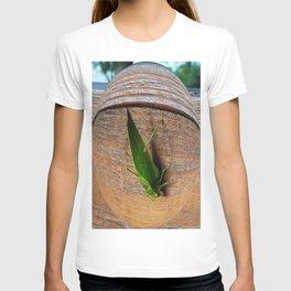 Katydid T-shirt